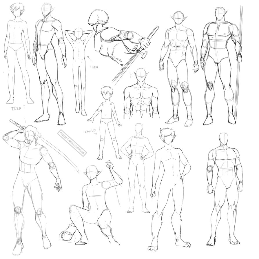 894x894 Male Anatomy By Precia T