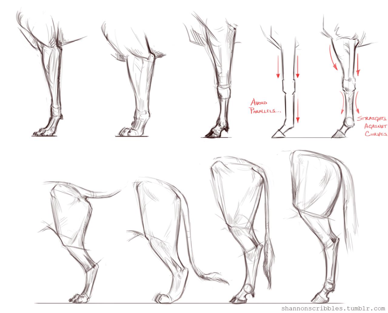1280x1032 Reworking Cgma Animal Drawing Course