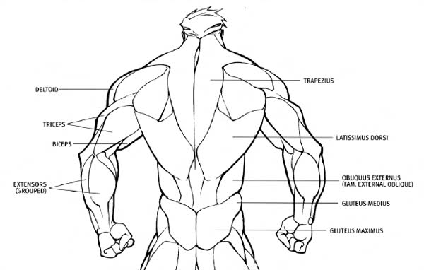 Human Back Drawing at GetDrawings.com | Free for personal use Human ...