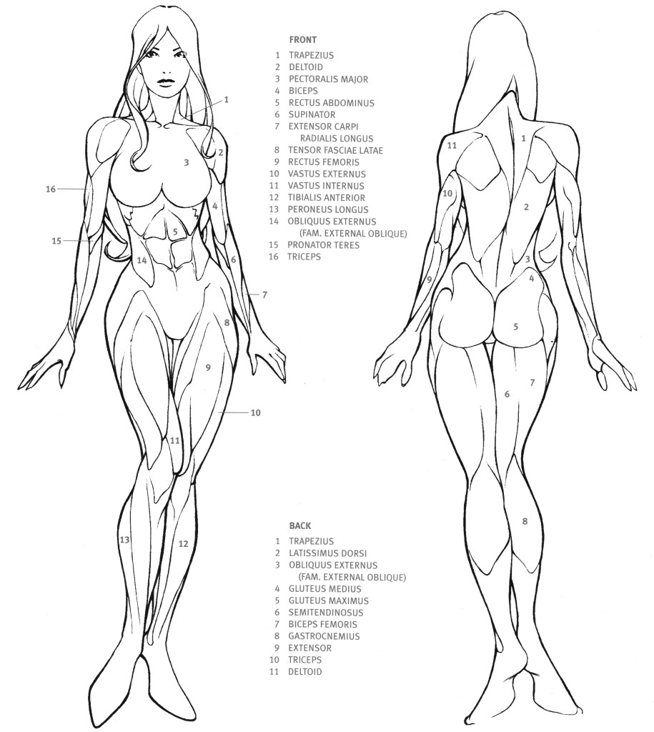 915x1024 Drawn Women Female Body Anatomy Pencil And In Color Draw On How