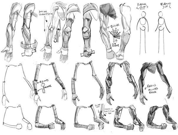 604x460 26 Best Human Anatomy Images On Human Anatomy, Human