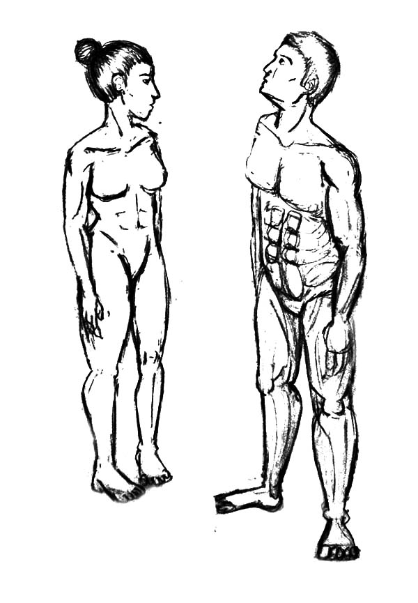 Human Body Drawing At Getdrawings Free For Personal Use Human