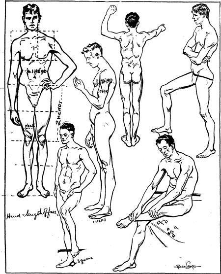 450x556 Proportions Amp Measurements Of Human Body Including Men, Women