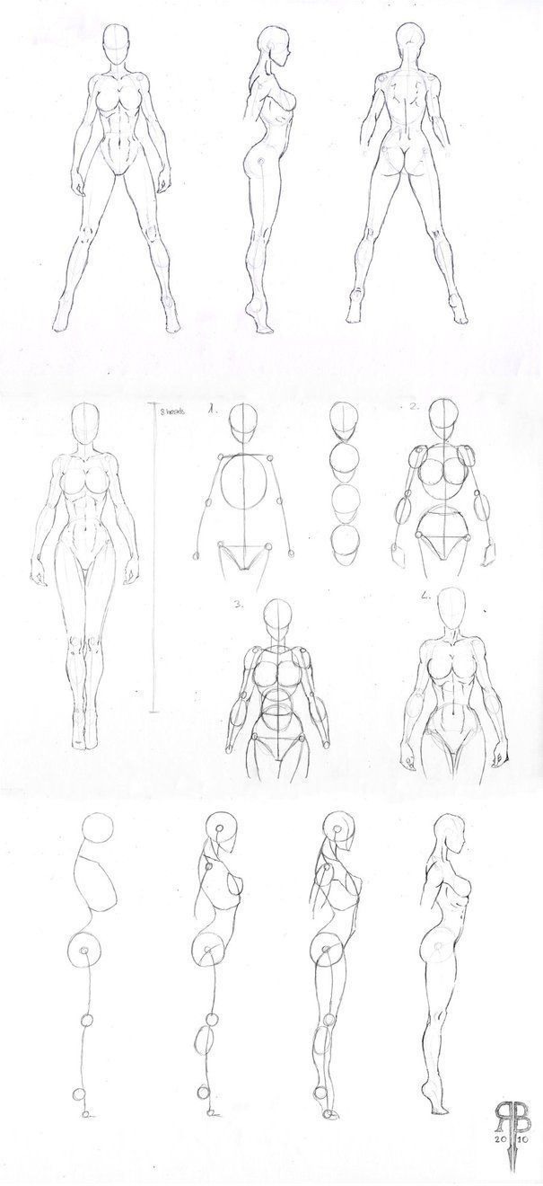 Human Body Female Drawing