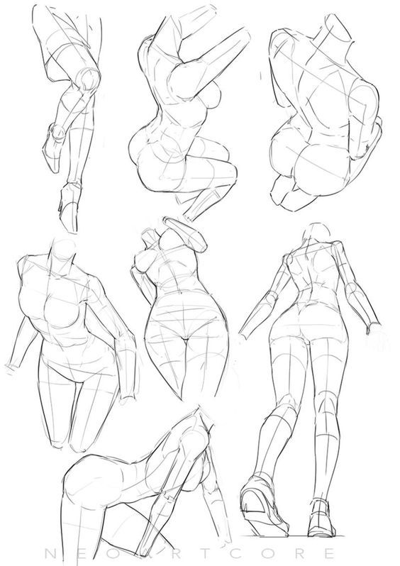 564x798 Anatomy Drawings Of Females
