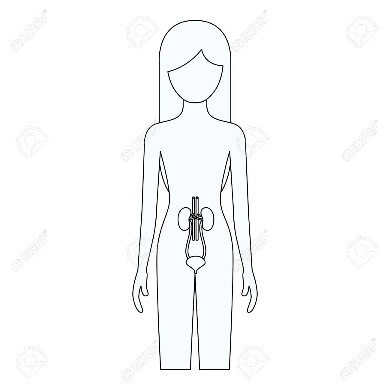 1300x1300 Sketch Silhouette Of Female Person With Renal System Human Body