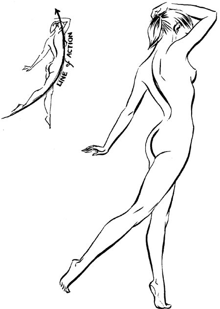 Human Body Line Drawing