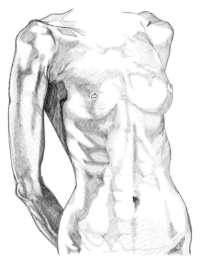 700x851 Anatomy Drawings Of The Human Body