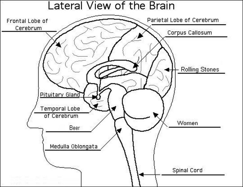 775x597 Drawn Brains Labeled
