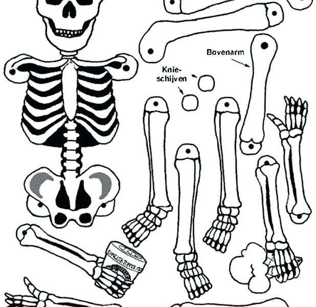 618x600 Human Body Coloring Pages Human Body Coloring Page Parts Pages