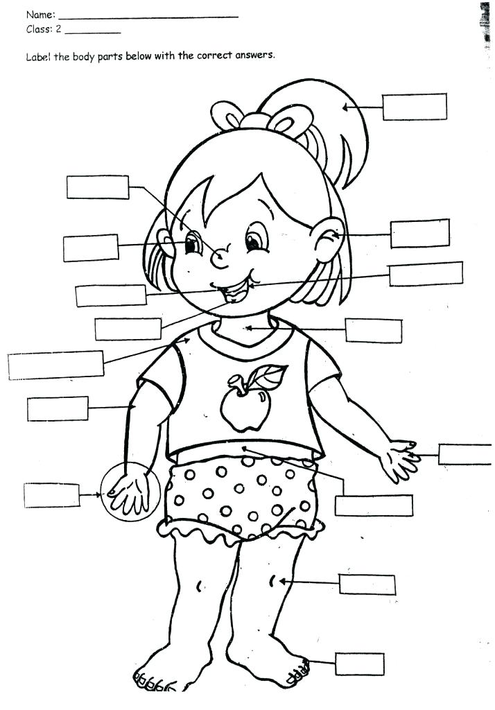 714x1024 Body Coloring Pages Human Body Coloring Book Also Human Body