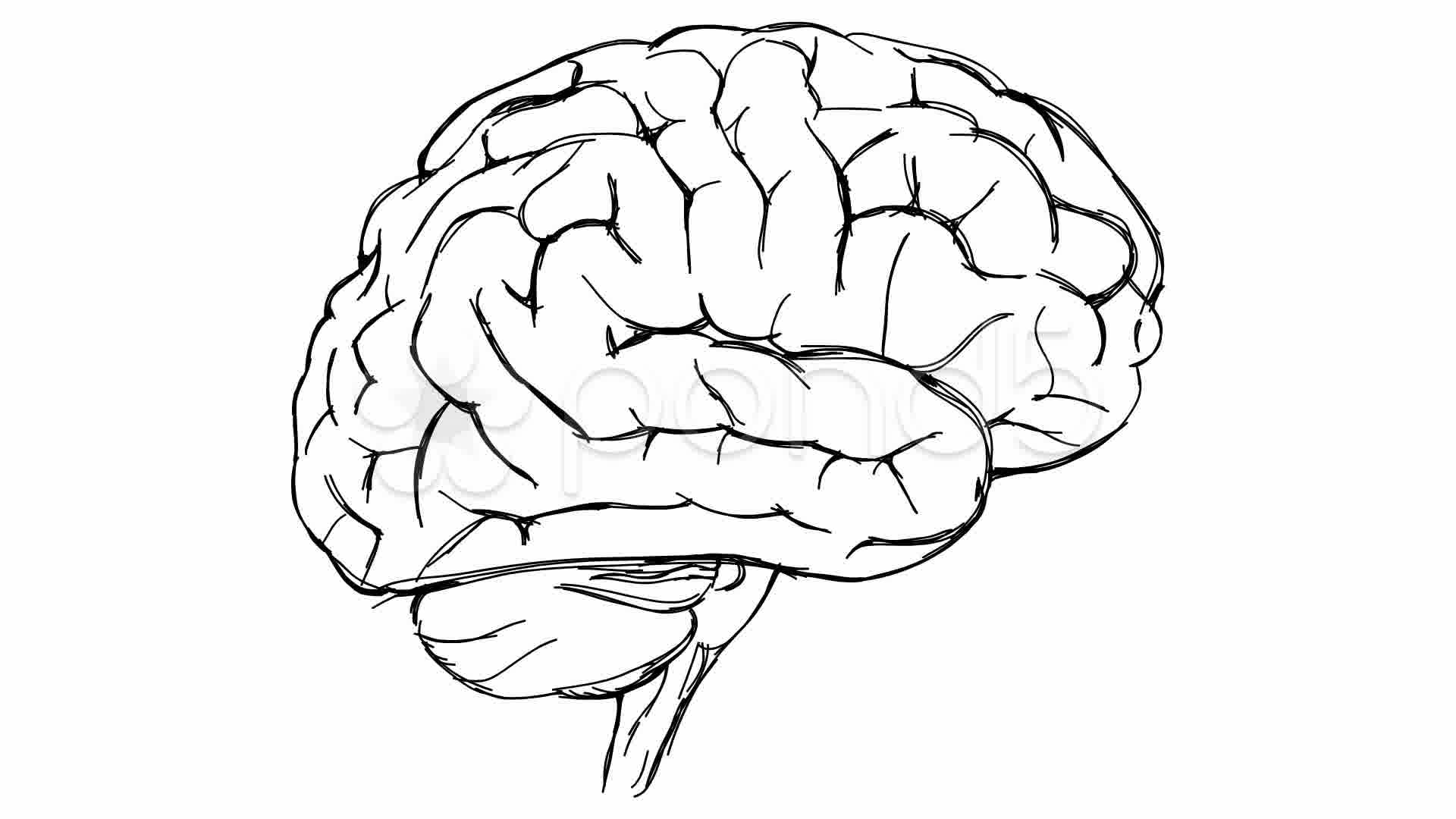 1920x1080 Brain Sketch ~ Video Clip Royalty Free