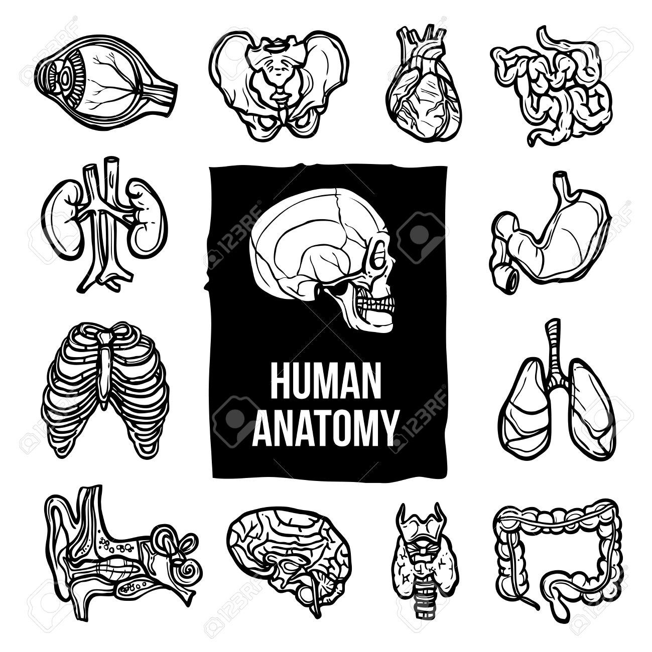 1299x1300 Human Anatomy Internal Body Organs Sketch Decorative Icons Set