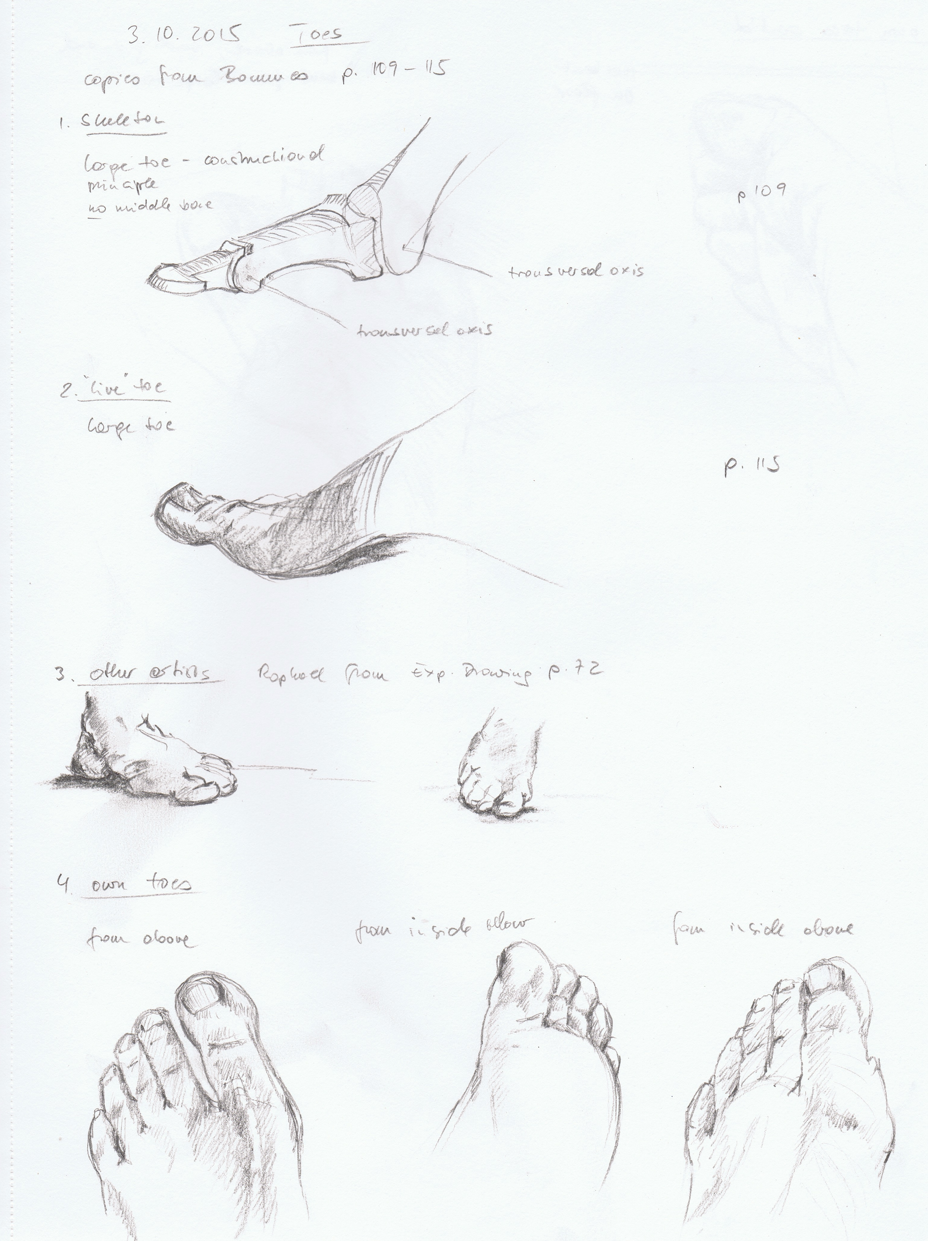 3092x4138 Part 4, Project 4, Exercise 1 The Structure Of The Human Body
