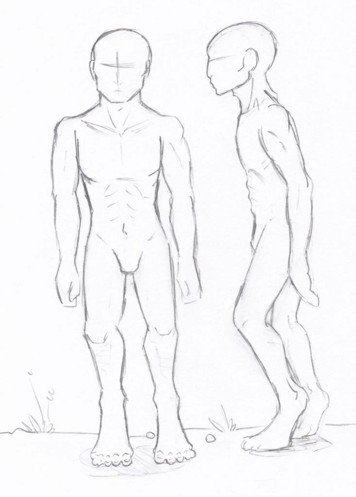 733x1024 Sketch Of The Human Body