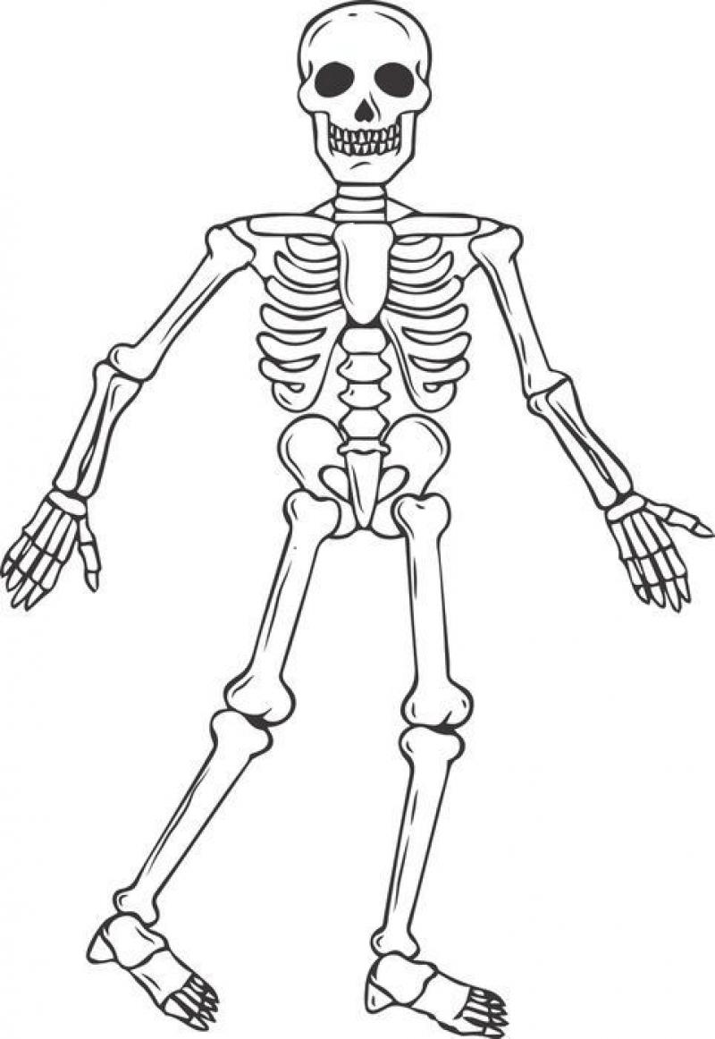 800x1162 Human Skeleton Coloring Book