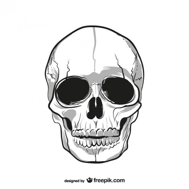 626x626 Human Skull Drawing Vector Free Download
