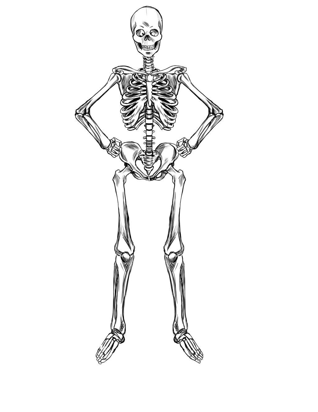 1024x1325 Skeleton Study By Ravendark82