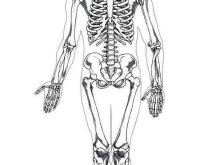 Human Bones Drawing