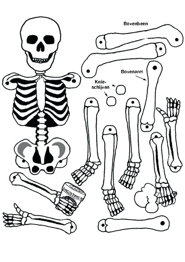 618x874 Skeleton Coloring Book Plus Skeleton Coloring Page Skeleton