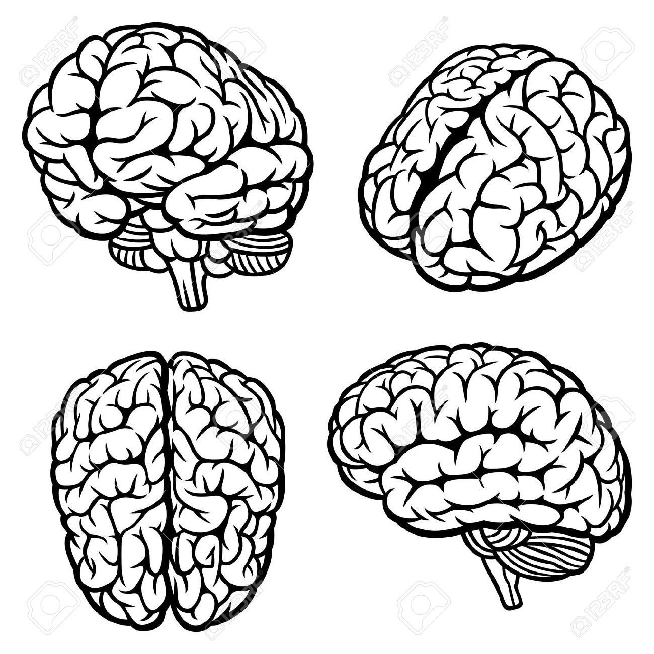1300x1300 16265773 Human Brain Set Of Four Views Vector Illustration Stock