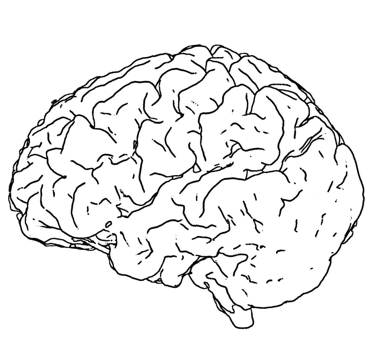 1275x1225 Gallery Brain Drawing Png,