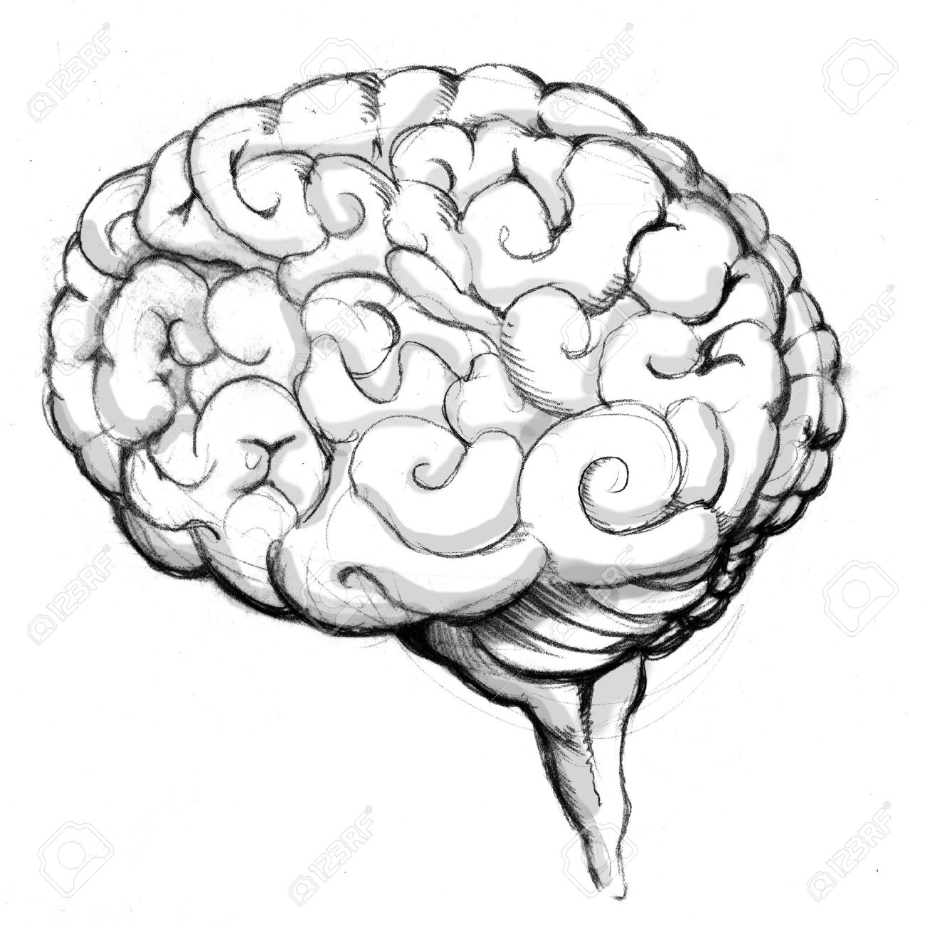 1300x1300 An Image Of A Human Brain Drawing. Stock Photo, Picture