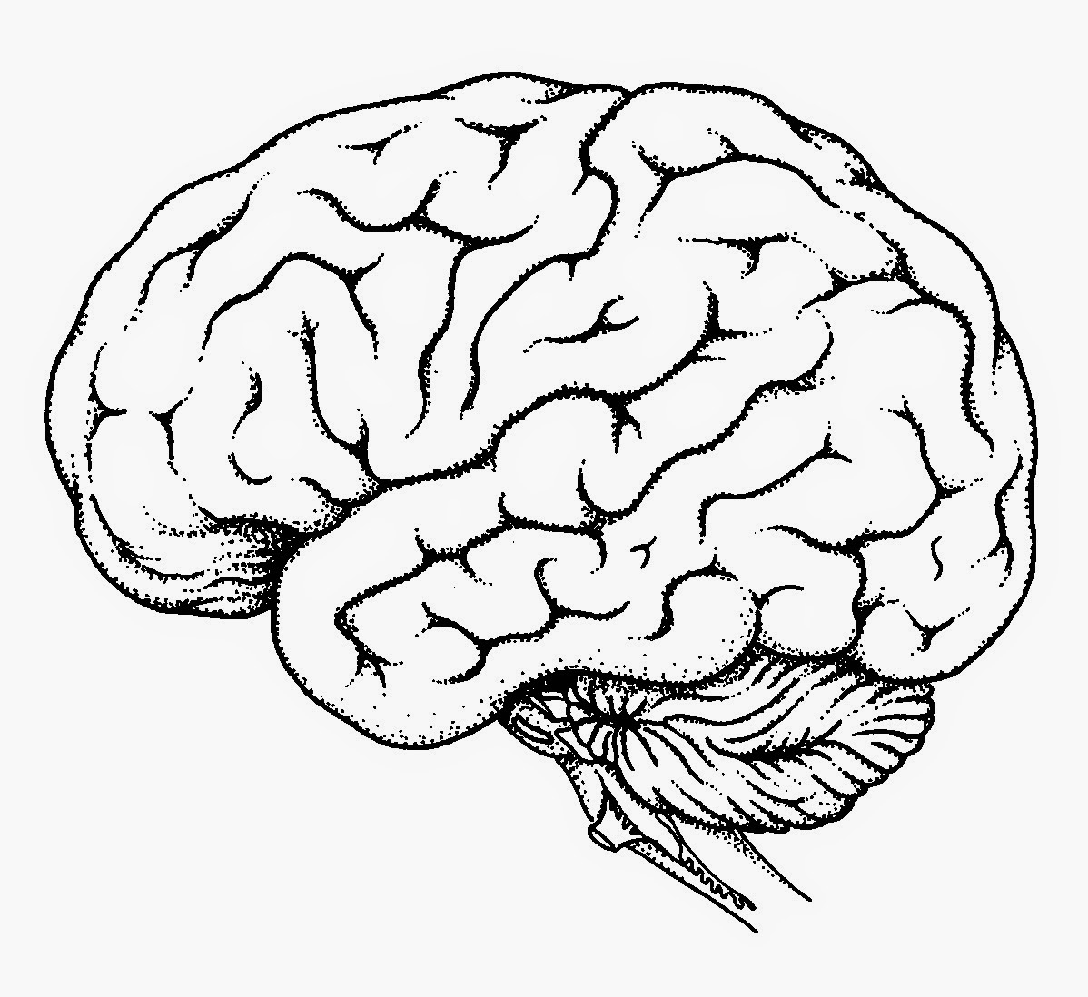 1198x1098 Simple Labeled Pencil Sketch Diagram Of Human Brain Drawn Brain
