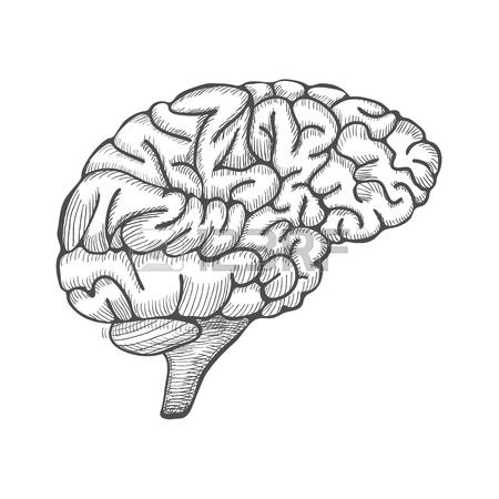 450x450 Sketch Ink Human Brain, Hand Drawn, Engraved Anatomical