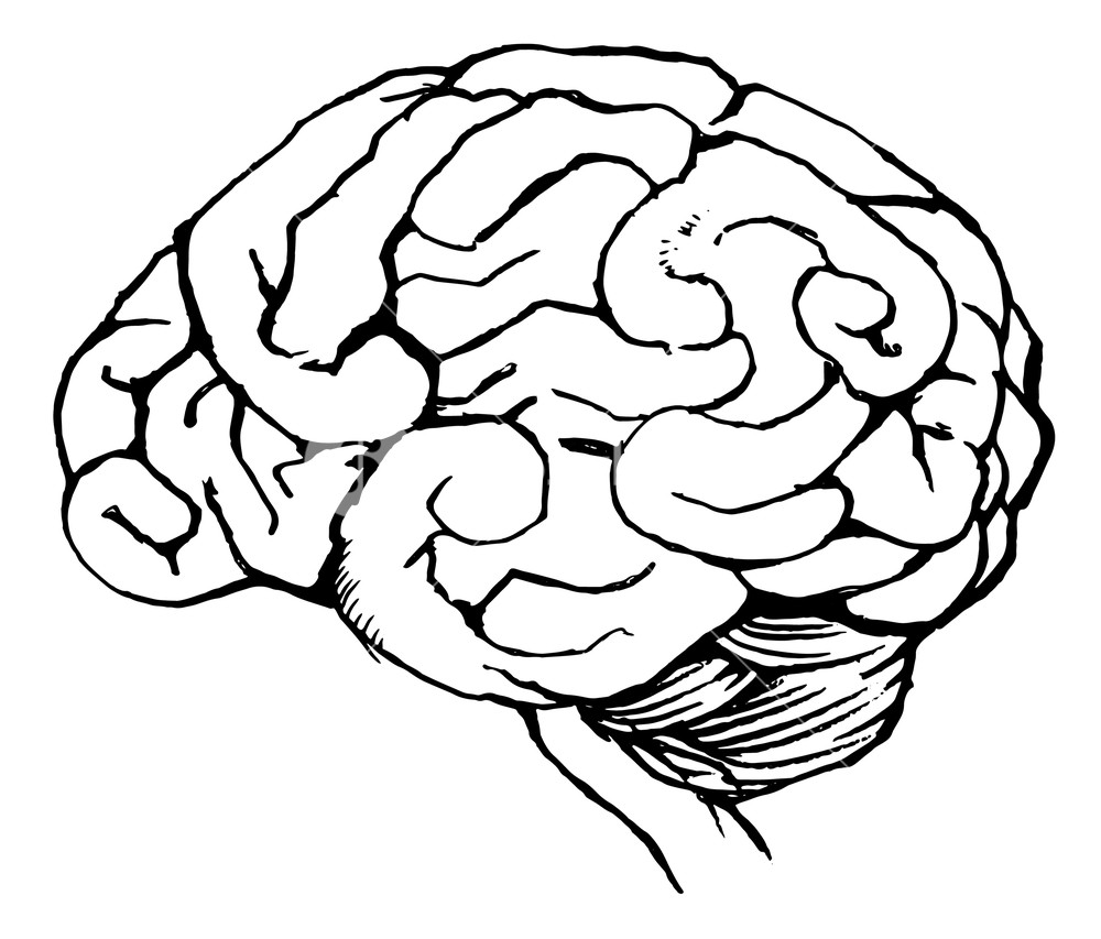 1000x853 Sketch Of The Human Brain Royalty Free Stock Image