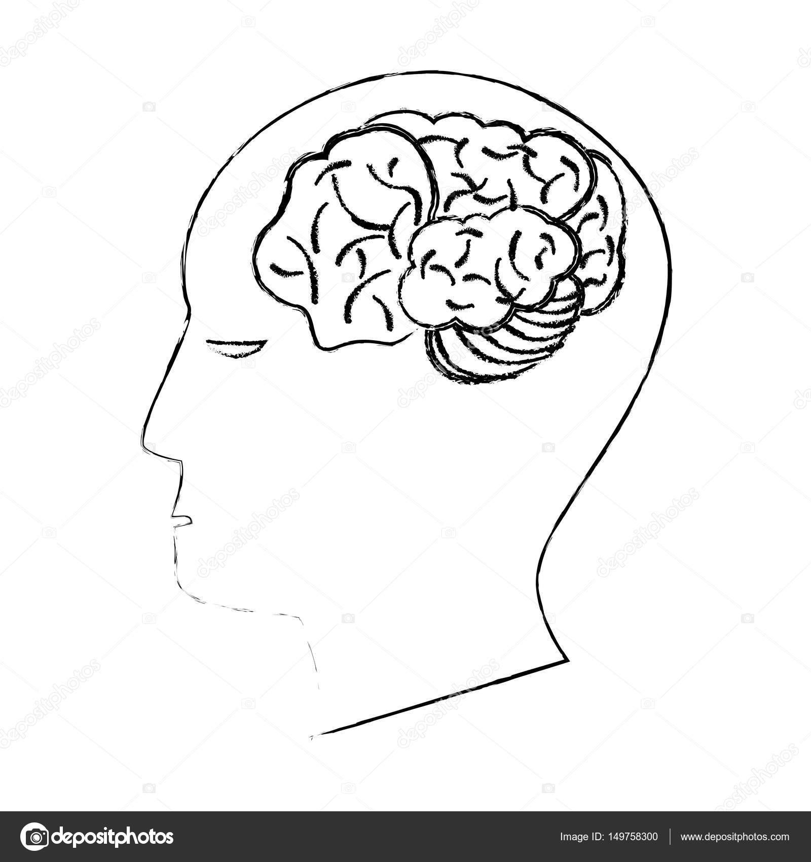 1600x1700 Head Human Brain Creativity Sketch Stock Vector Jemastock