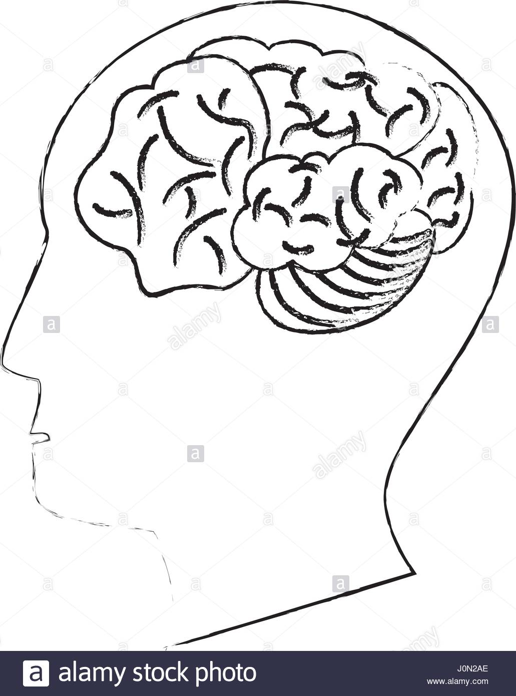 Human Brain Drawing At Free For Personal Use Vector Dry Battery Diagram Stock Photos Bigstock 1031x1390 Head Thinking Idea Sketch Art