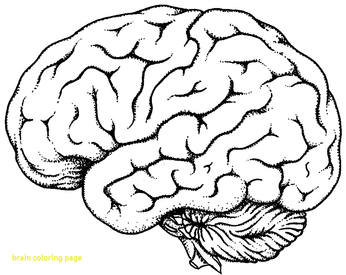 1148x911 Brain Coloring Page With Coloring Sheet Brain Kids Drawing