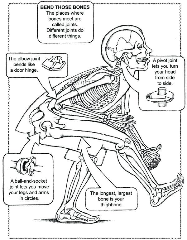 human cell drawing at getdrawings com