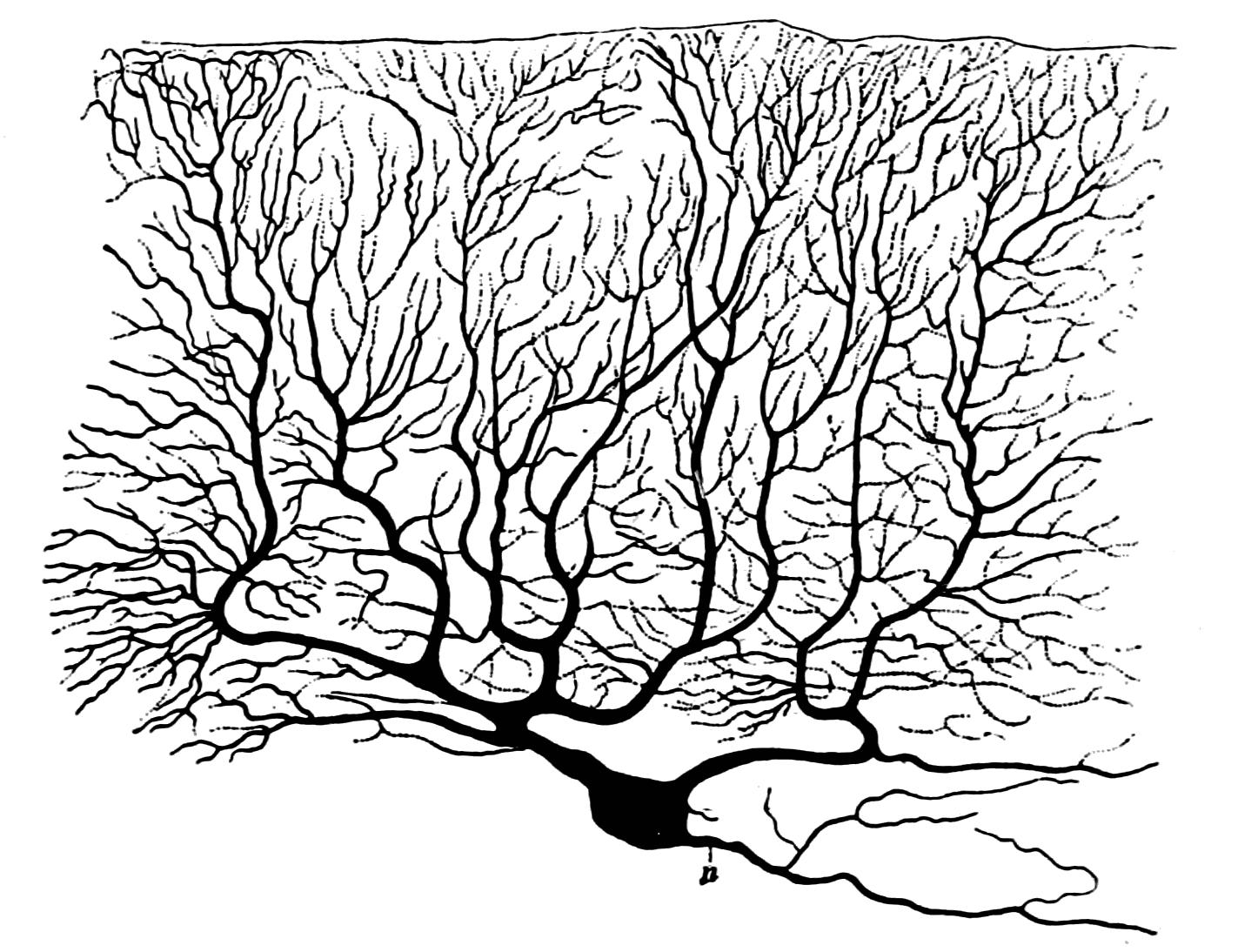 1423x1094 Neuron's Brain, Remarkable Scaffolding Microubules Jon Lieff, M.d.