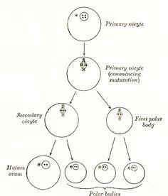 236x276 Online Gray's Anatomy