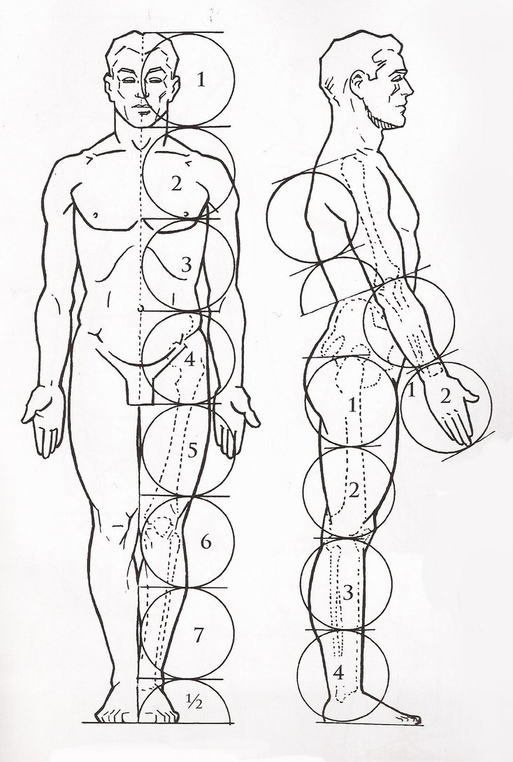 734x1089 Human Body Basic Proportions By Pammella