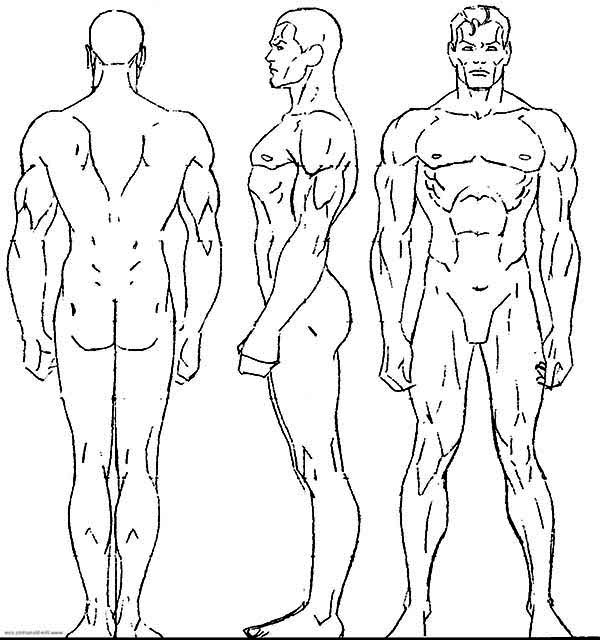 600x640 Male Human Body Coloring Pages Male Human Body Coloring Pages