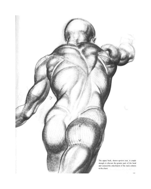 638x801 Burne Hogarth Dynamic Figure Drawing