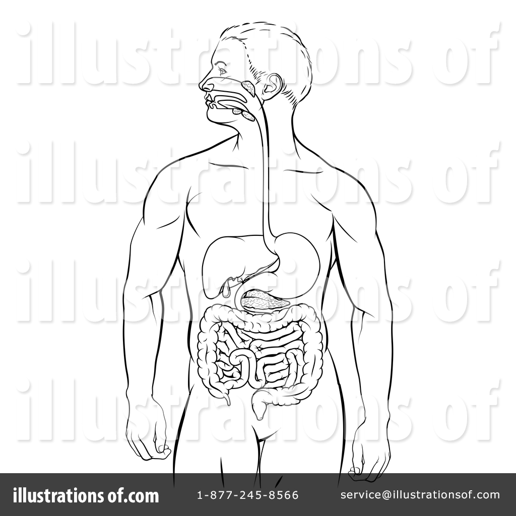 1024x1024 Digestive System Clipart