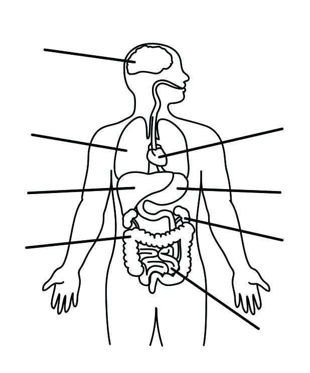618x742 Digestive System Coloring Pages Digestive System Coloring Page