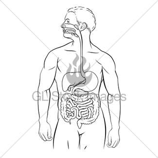 325x325 Human Digestive System Gl Stock Images
