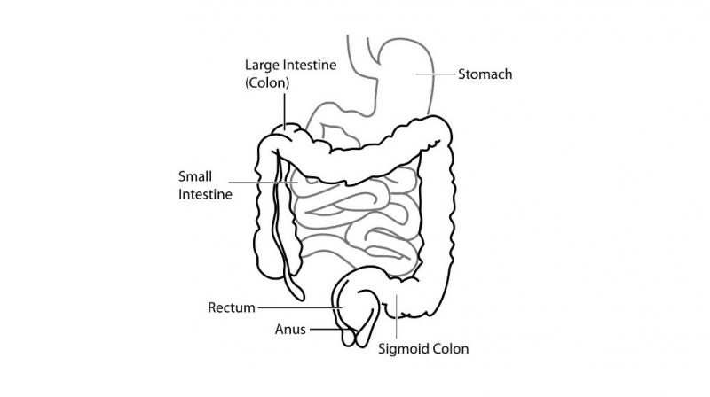 800x448 New Human Organ In Digestive System Discovered