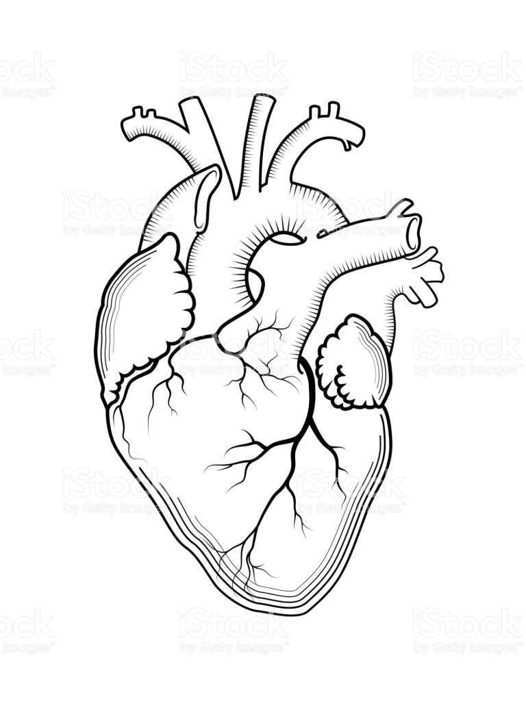 768x1024 Gallery Human Heart Drawing Outline,