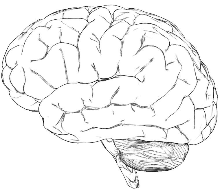 760x668 Brain Drawing Template Brain Drawing Te