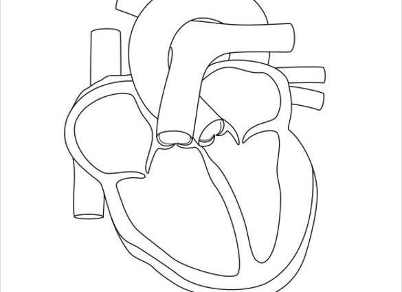 585x425 Human Heart Template 19 Heart Diagram Templates Sample Example