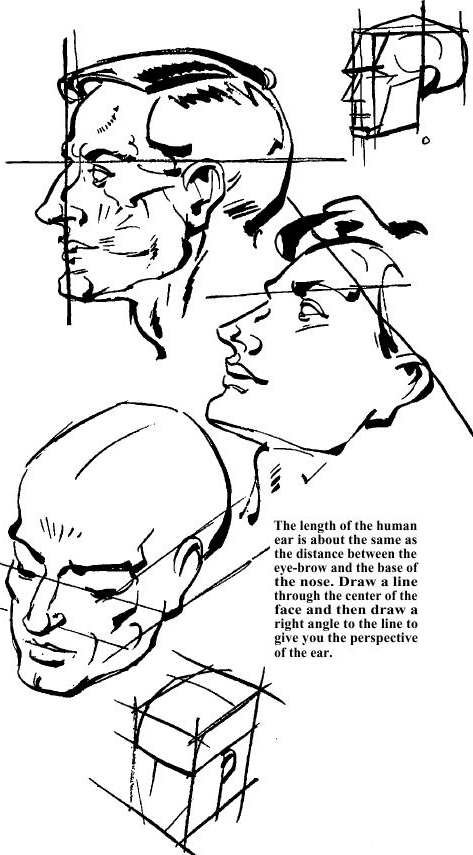 473x855 Drawing The Human Face Amp How To Draw Head, Eyes, Nose, Mouth, Ears