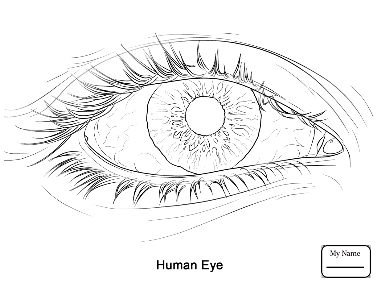 1223x917 Human Ear People Coloring Pages