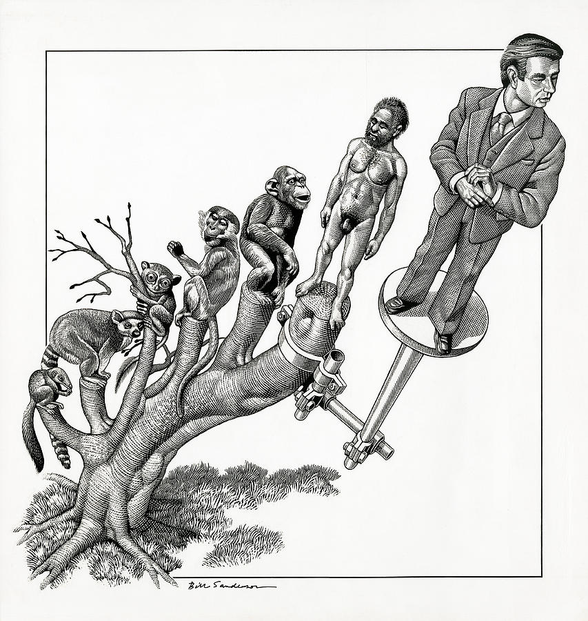 853x900 Human Evolution, Conceptual Artwork Photograph By Bill Sanderson
