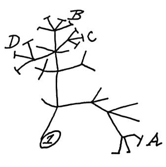 337x339 Human Evolutionary Theory